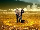 фото - ВСЕ ФОТО КАСЕСТВОМ Н ... - Wallpapers - животные (медведи, лошади, дельфины, коты и др.)