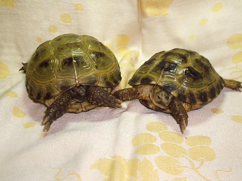 фото альбом Сухопутные черепахи Завра и Дино