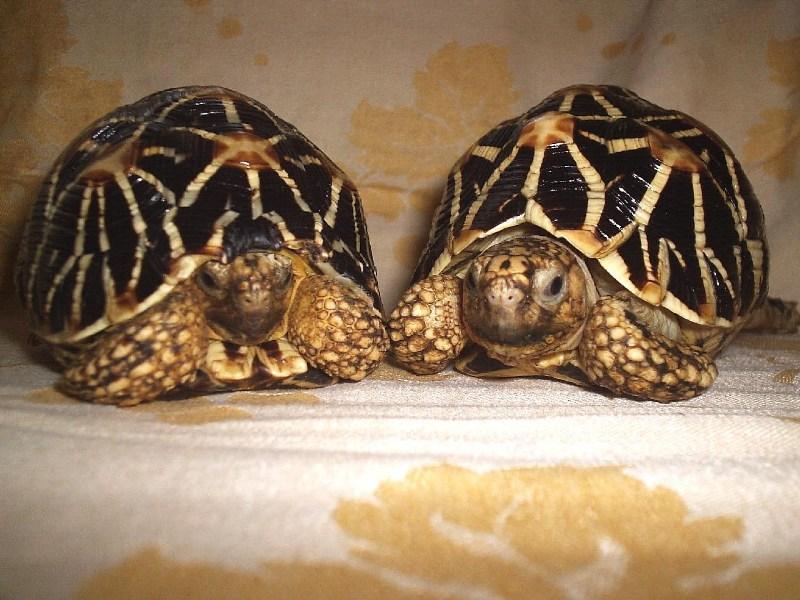фото альбом Сухопутные черепахи Буся и Барри
