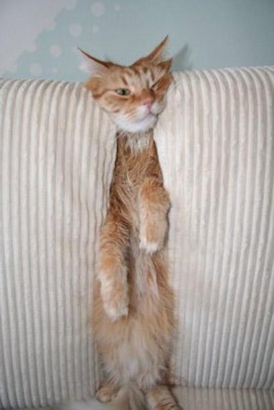 фото альбом коты