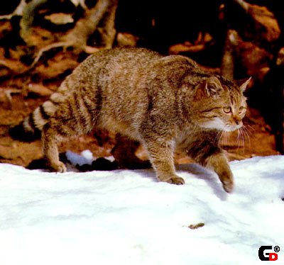 фотографии альбом Любителям кошек... более 100 прикольных кошек!!!