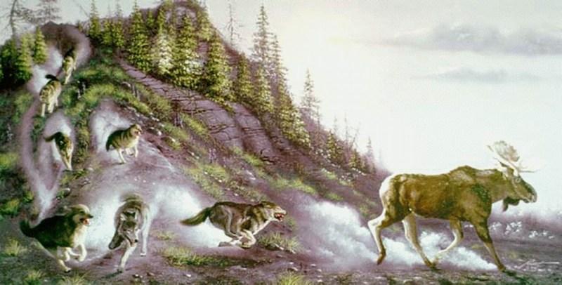 фото альбом Призраки ОЧЕНЬ необычные картинки волков....