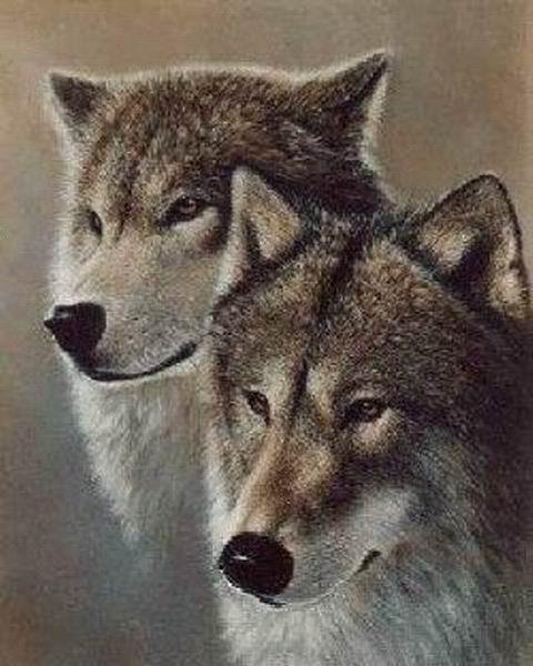 фото альбом Стаи 2 и больше волка