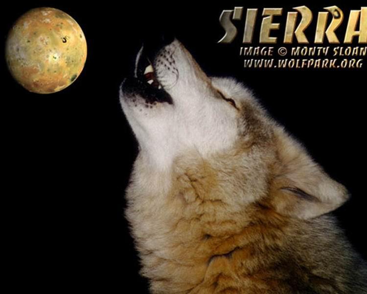 фотографии альбом Рыжие картинки рыжих волков