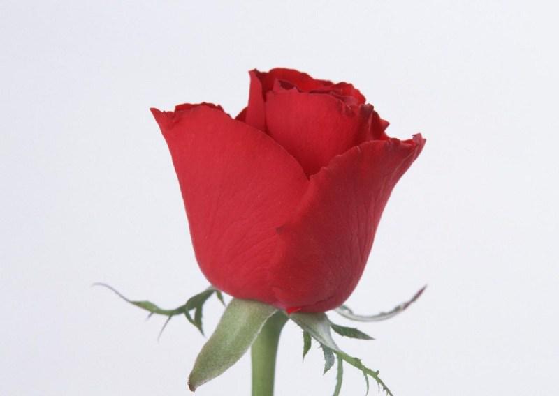 фото альбом Flowers Flowers