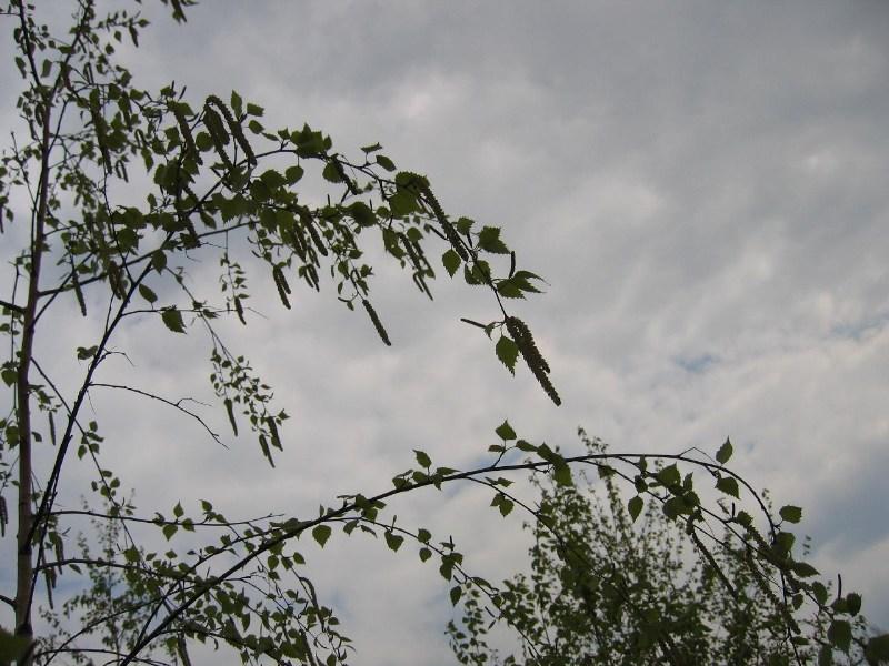 фото альбом magnolii2004