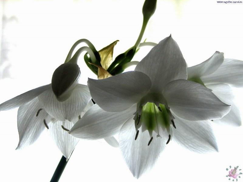 фотографии альбом Цветы Цветы - 2005