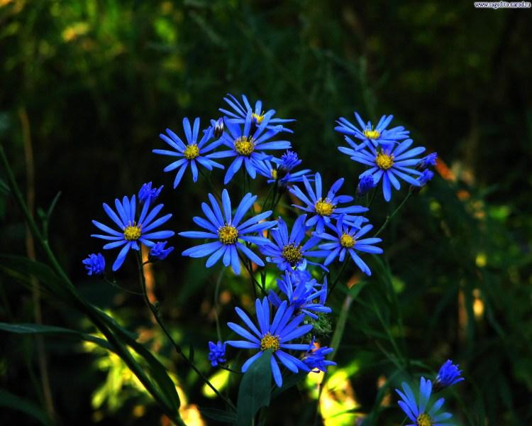 фото альбом Цветы Цветы - 2005