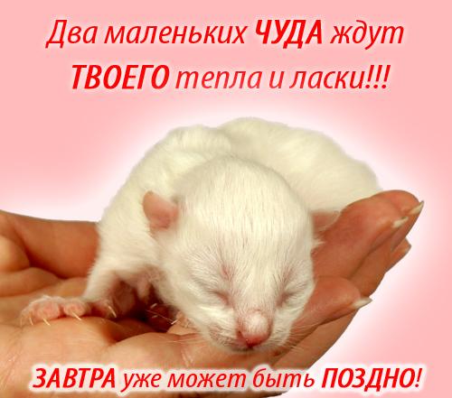 фотографии альбом Любимые лица Для ТЕБЯ!