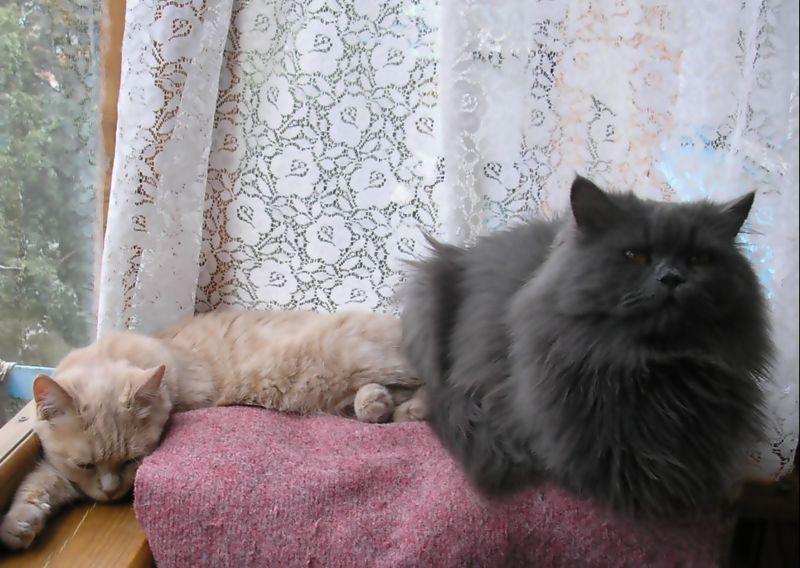 фото альбом животные Коты
