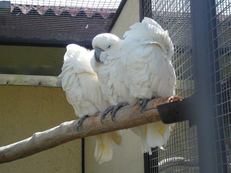 фотографии альбом животные и птицы Святая Троица