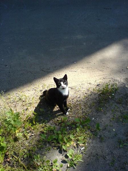 фото альбом Кошки Пушинка.JPG