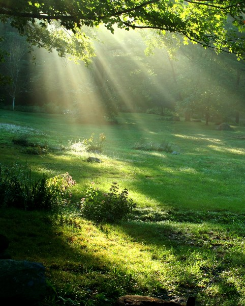 фото альбом Природа fotolia_1917615nature-soleil-vert.jpg