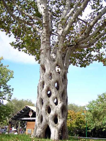 фотографии альбом Уникальные деревья 1.8circustree.jpg