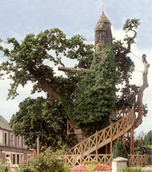 фото альбом Уникальные деревья 10-most-magnificent-trees-in-the-world-chapel-oak-of-allouville-bellefosse-5.jpg