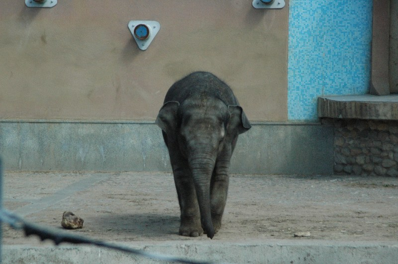 фото альбом слоны DSC_0147.JPG
