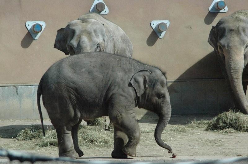 фото альбом слоны DSC_0149.JPG