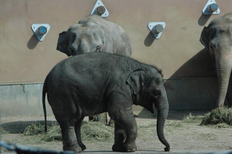 фото альбом слоны DSC_0150.JPG