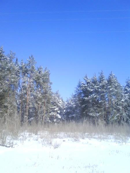 фото альбом Зимний лес Фото 1316.jpg
