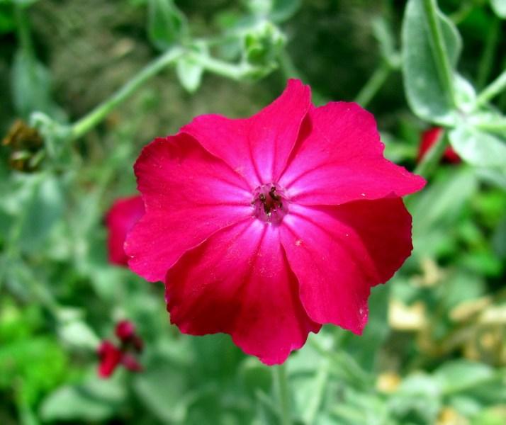 фото альбом Макро - флора Цветок.jpg