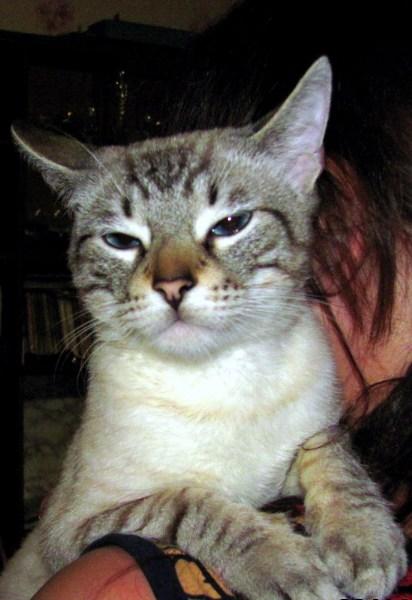 фото альбом Кошки 193.jpg