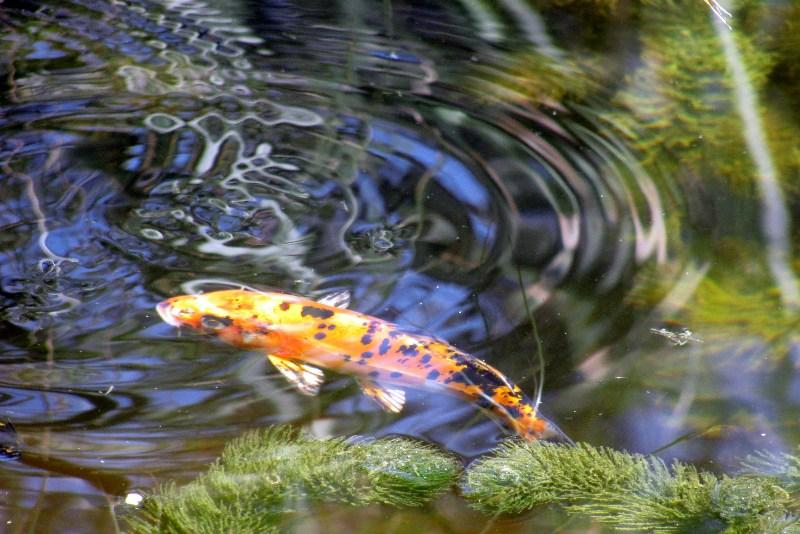 фотографии альбом Звери, птицы, рыбы... IMG_3943-2.jpg