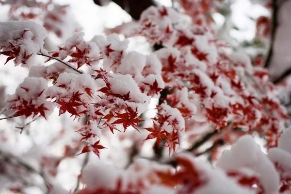 фото альбом Снег 0_679a1_8cc1da1f_XL.jpeg