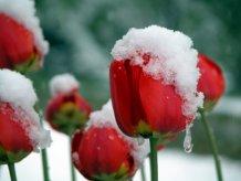 фото альбом Снег 383413184.jpg