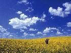 фото - pic_wonder_prairie_sky_lg.jpg - Sky