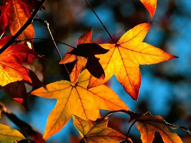 фото альбом Осень 6683d4fb33680f2e8f7627495b042153_full.jpg
