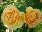 фото - P1060377.JPG - Летние цветы
