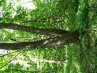 "фото - DSCN0520.JPG - Музей-усадьба А.Т.Болотова ""Дворяниново"""