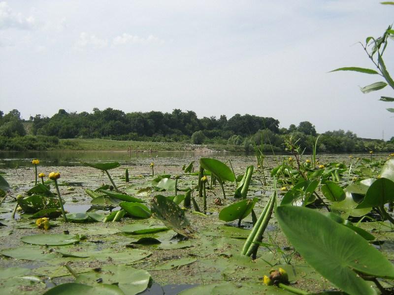 фото альбом Природа Изображение 004.jpg