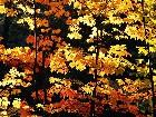 фото - fallsaplings.jpg - осень