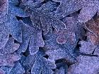 фото - frosted_leaves.jpg - осень
