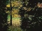 фото - leaves003.jpg - осень