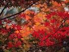 фото - leaves014.jpg - осень