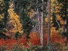 фото - leaves016.jpg - осень