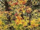 фото - leaves017.jpg - осень