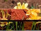 фотографии - IMG_1294.JPG - Цветы