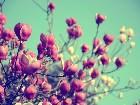 фотографии - DSC_1625-4.jpg - Цветы