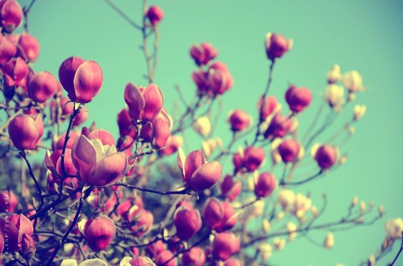фото альбом Цветы DSC_1625-4.jpg