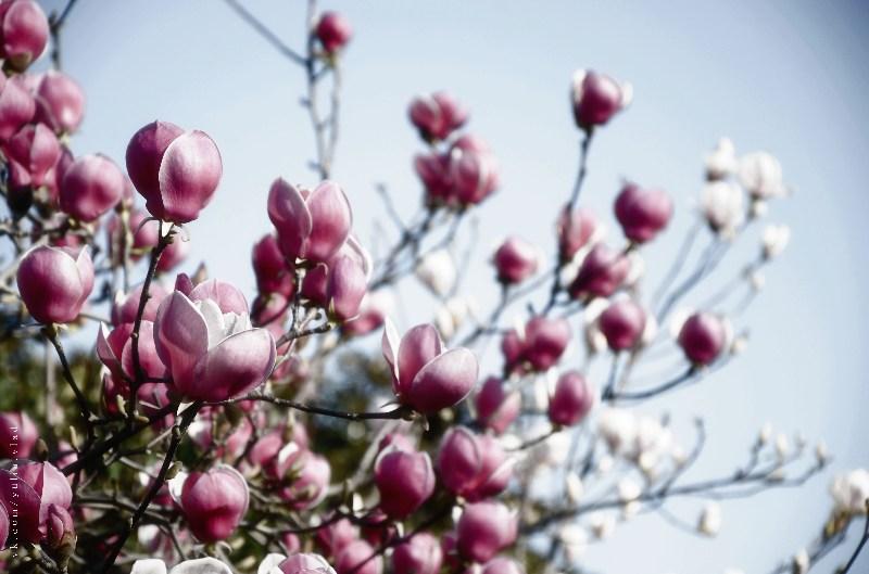 фото альбом Цветы DSC_1625-5.jpg