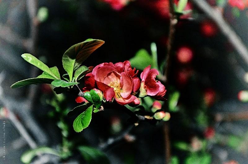 фото альбом Цветы DSC_2013-3.jpg