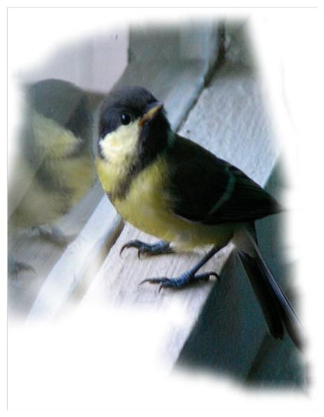 фото альбом Животные P8011831_4.jpg