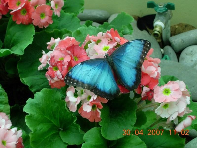 фото альбом Разное Еще бабочка